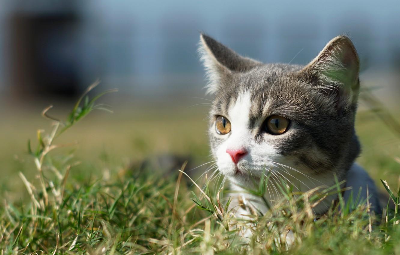 Фото обои кошка, трава, взгляд, мордочка, котёнок