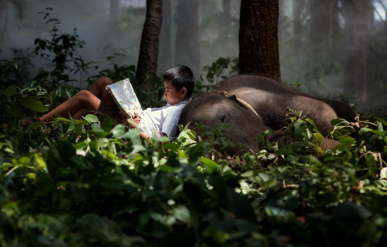 Фото обои лес, слон, мальчик, книга
