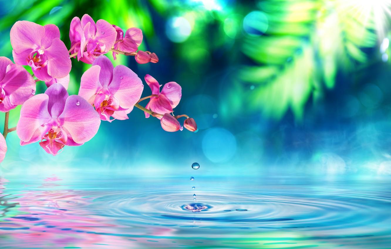 Фото обои вода, цветы, ветка, орхидея