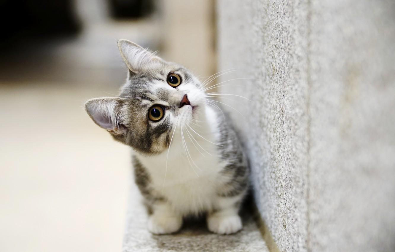Фото обои глаза, котенок, милый