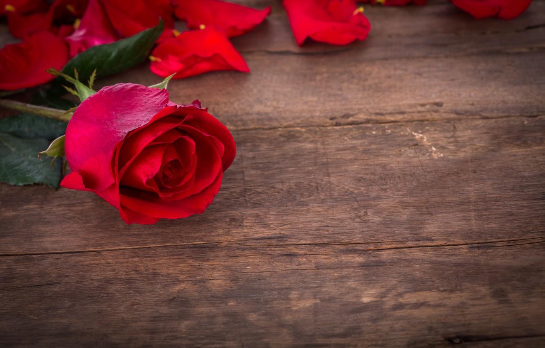 Фото обои розы, red, love, бутоны, flowers, romantic, roses, красные розы, valentine`s day