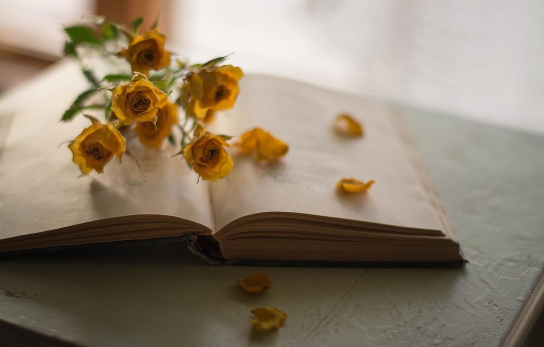 Фото обои Цветы, Книга, Розы