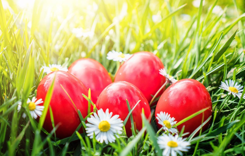 Фото обои трава, цветы, корзина, Пасха, flowers, spring, Easter, eggs, decoration, basket, Happy, яйца крашеные