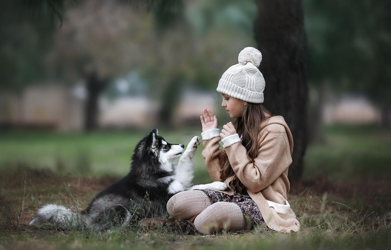 Фото обои осень, животное, игра, собака, девочка, щенок, пальто, ребёнок, шапочка, хаски, подросток
