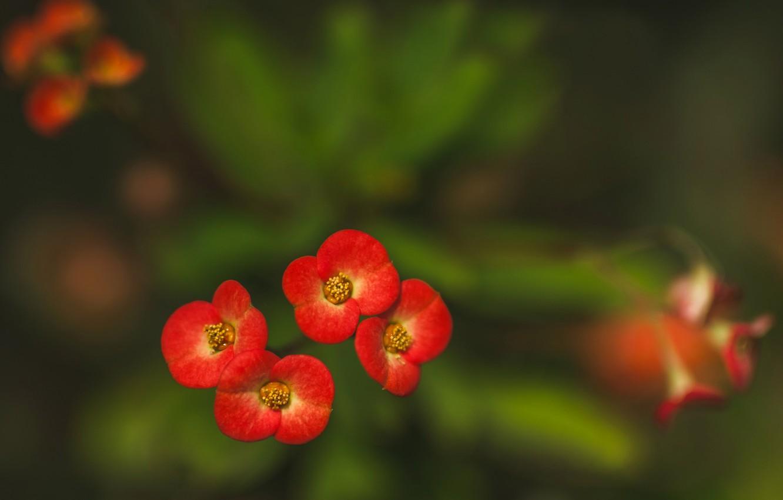 Фото обои макро, природа, лепестки