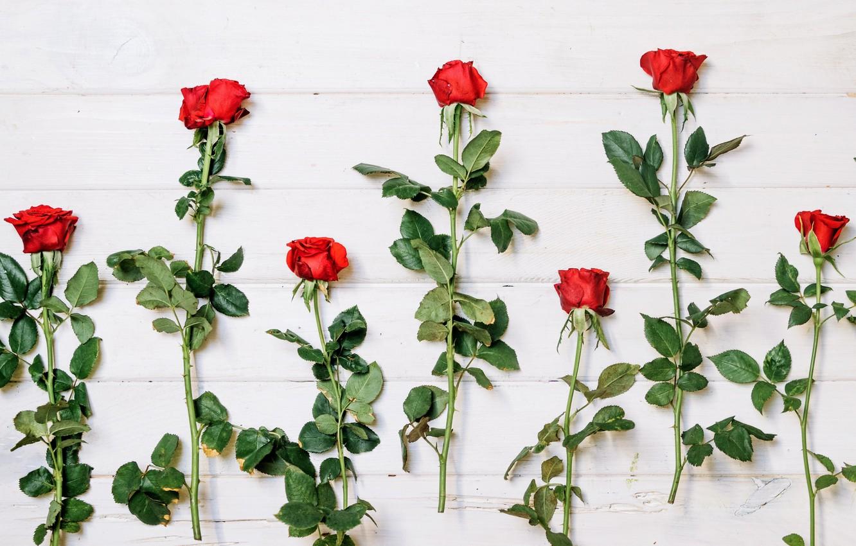 Фото обои Цветы, Фон, Бутоны, Розы