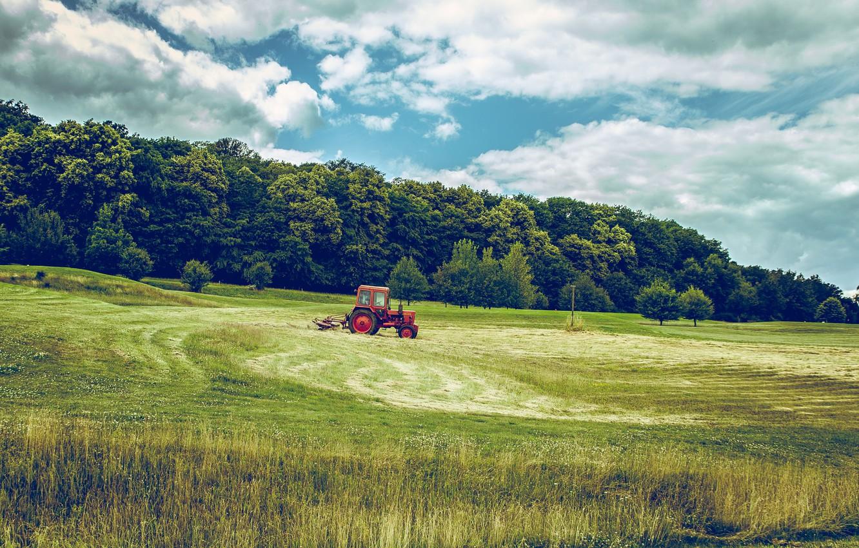 Фото обои поле, лес, небо, трава, трактор, сельскохозяйственная техника