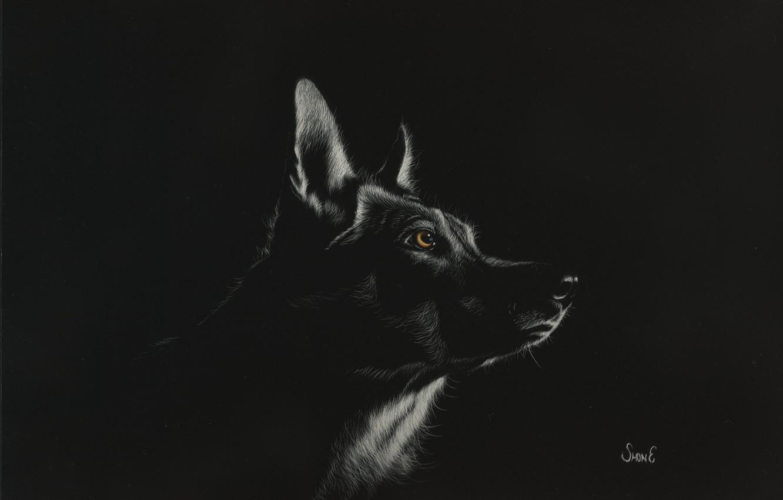 Обои рычит, Оборотень, werewolf, wolf. Разное foto 17