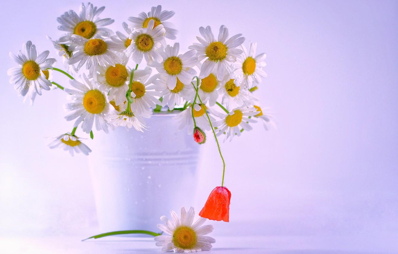 Фото обои цветы, ромашки, букет, ведерко