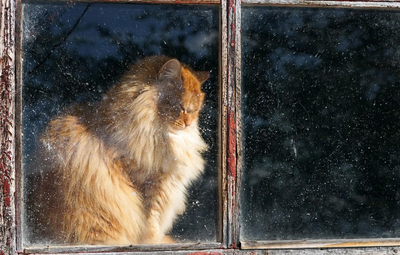 Фото обои кошка, дом, окно
