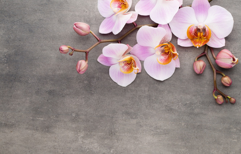 Фото обои орхидея, pink, flowers, orchid