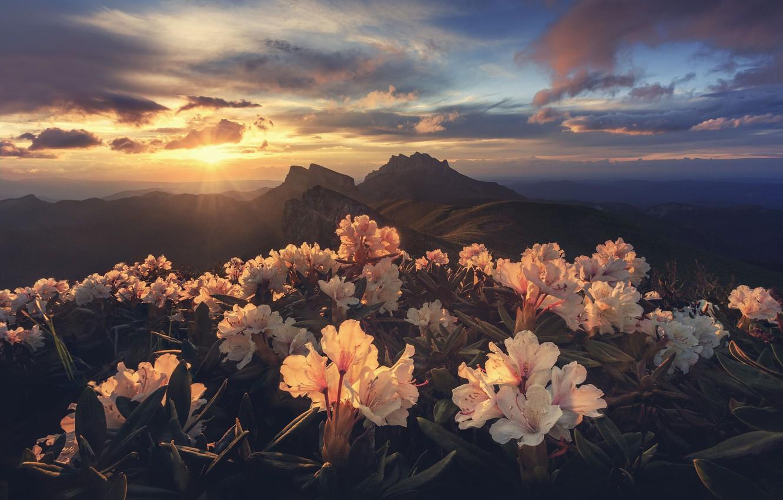 Фото обои солнце, свет, цветы, горы, утро