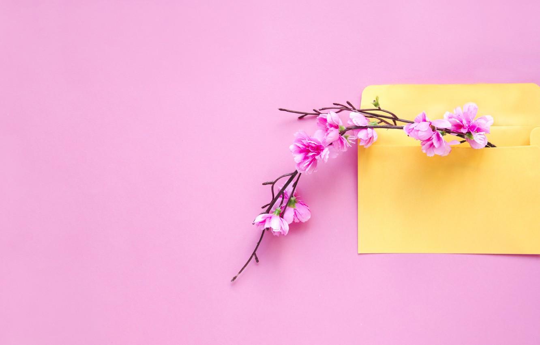 Фото обои цветы, фон, ветка, весна, розовые, pink, blossom, flowers, конверт, letter, spring