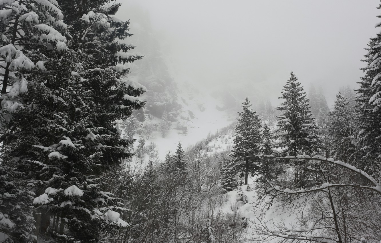 Фото обои Зима, Деревья, Снег, Мороз, Winter, Frost, Snow, Trees, Сугробы
