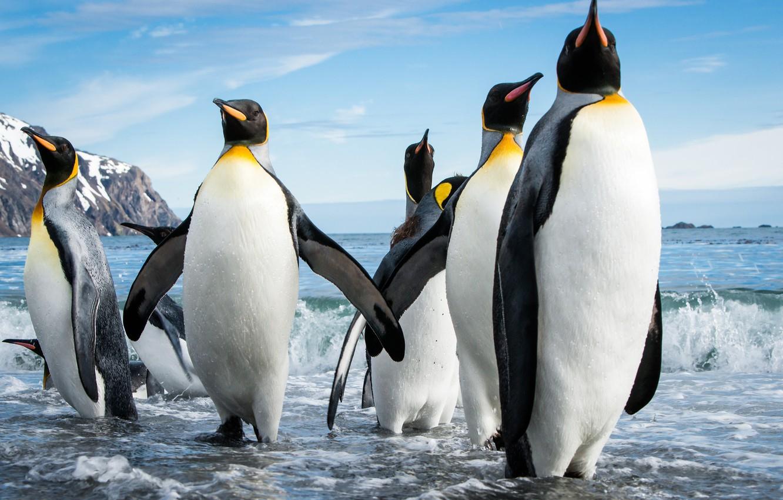 Фото обои море, пляж, стая, пингвины