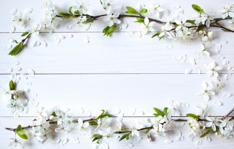 Фото обои цветы, фон, весна, яблоня, wood, blossom, flowers, spring, frame
