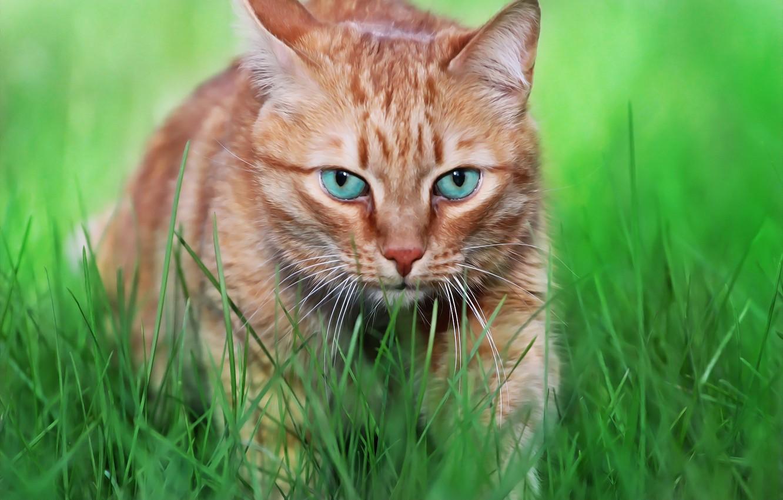 Фото обои зелень, кот, морда, травка