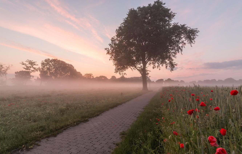 Фото обои туман, маки, утро