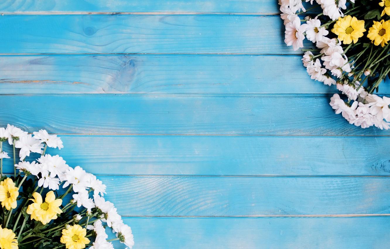 Фото обои цветы, хризантемы, голубой фон
