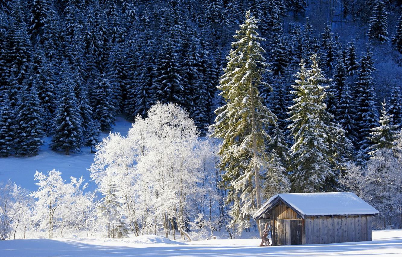 Фото обои зима, лес, снег, деревья, Германия, Бавария, сарай, Germany, Bavaria