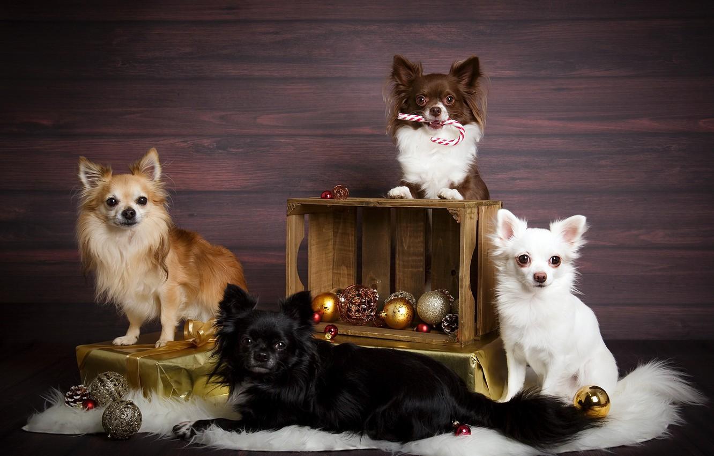 Фото обои собаки, праздник, игрушки