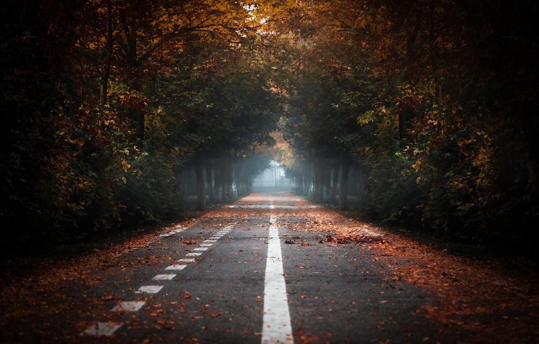 Фото обои дорога, осень, туман