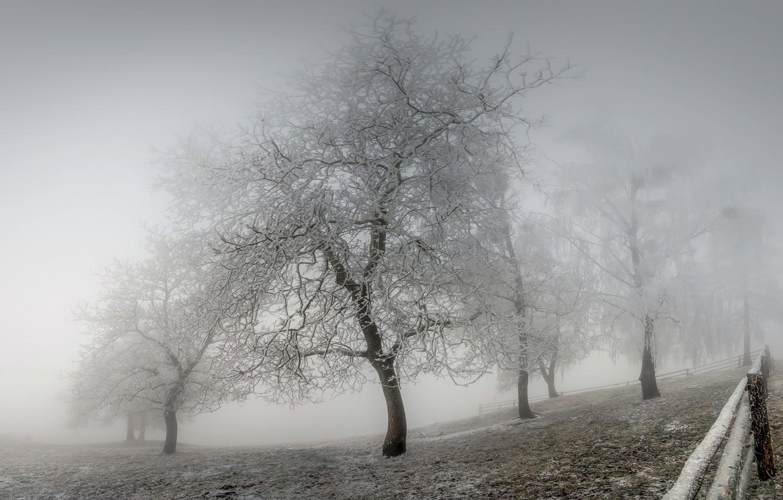 Фото обои зима, иней, туман