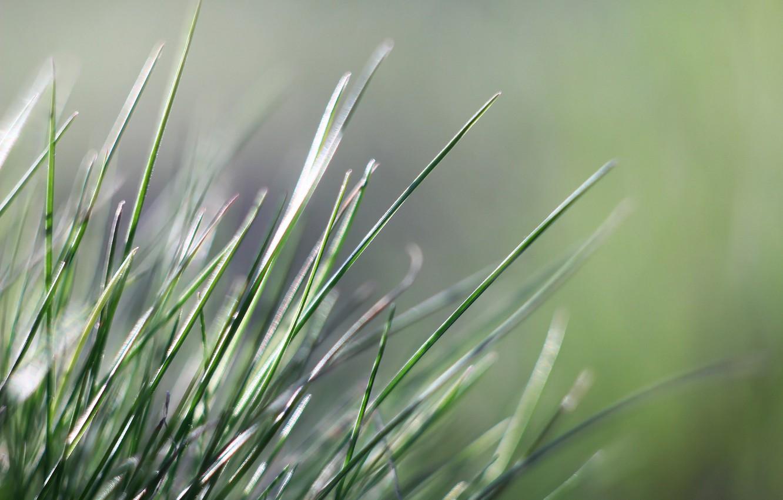 Фото обои фон, весна, травинки