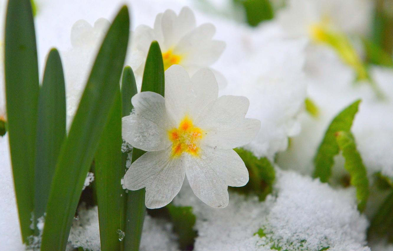 для многих картинки на весь экран цветы под снегом были времена, когда