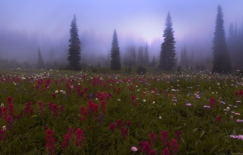 Фото обои лес, цветы, природа, туман, луг, дымка