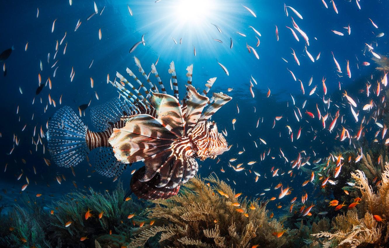 Рыбы в воде картинки