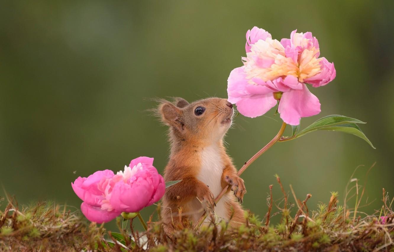 красивые картинки цветами и животными хорошие
