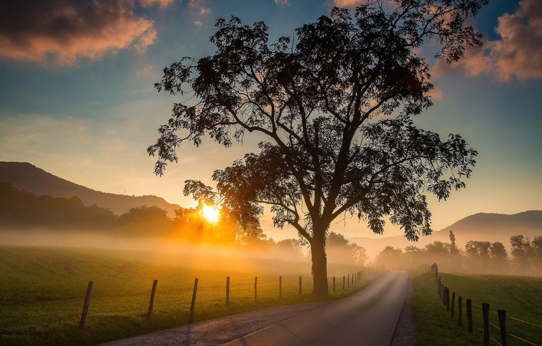 Фото обои дорога, восход, дерево, рассвет, поля, утро, Tennessee, Cades Cove, Теннесси, Great Smoky Mountains National Park, …