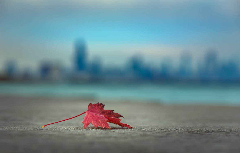 Фото обои осень, лист, фон