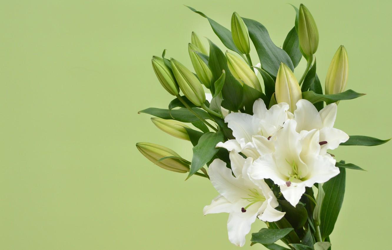 фото фон с лилиями сегодня
