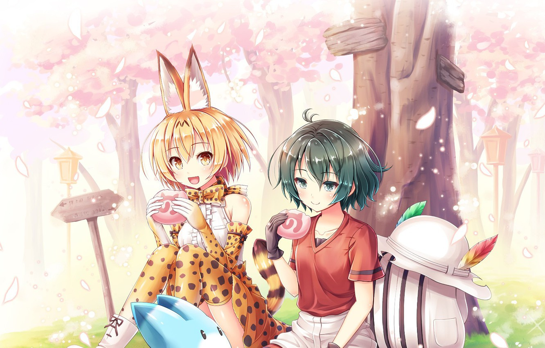 Фото обои girl, anime, sakura, japanese, bishojo, Kemono Fiends