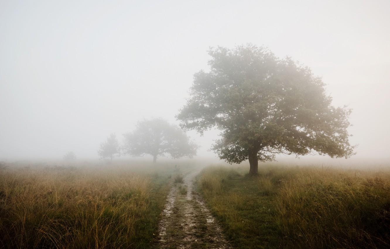 Фото обои дорога, поле, туман