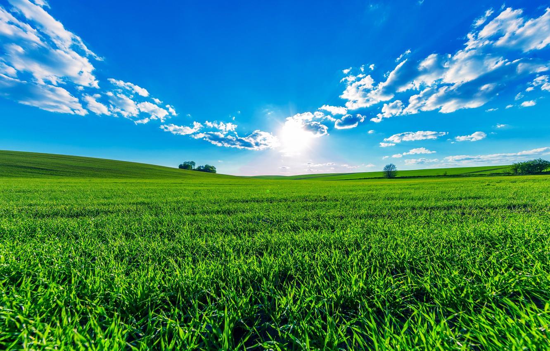 Фото обои зелень, поле, лето, небо, трава, солнце, облака, деревья