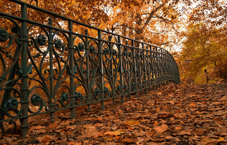 Фото обои осень, листья, улица, забор