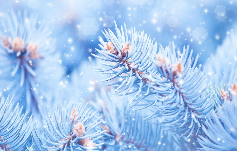 Фото обои макро, Природа, Снег, Ветки, Ель
