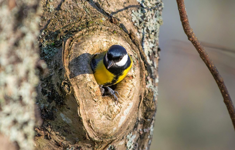 человека гнезда в дуплах деревьев фото хватает