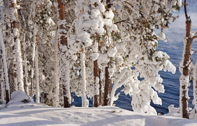 Фото обои зима, иней, лес, снег, деревья, природа, река, мороз, сосны