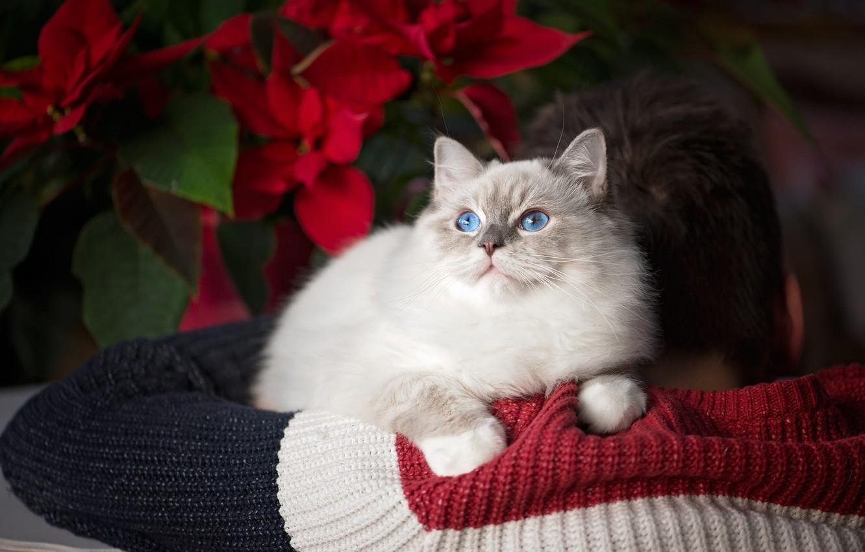 Парни и кошки...или кошки и парни?)) - (DlyaKota.Ru) | 850x1332