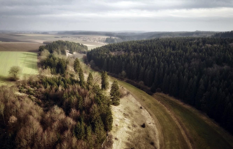 Фото обои лес, пейзаж, природа