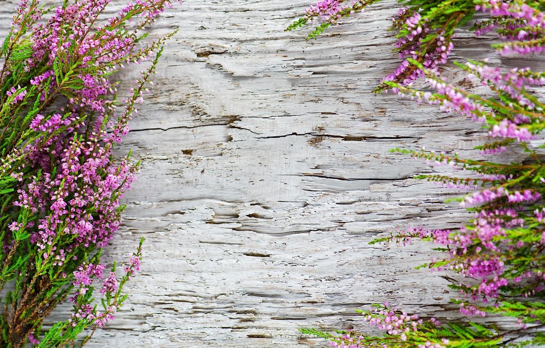 Фото обои фон, растение, древесина