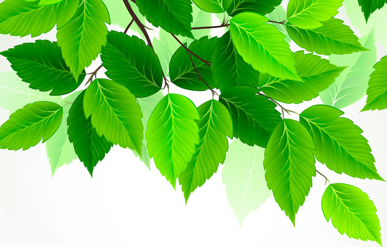 Фото обои листья, зеленый, береза