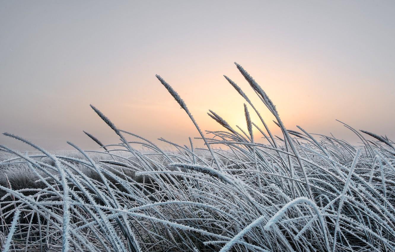 Фото обои холод, зима, иней, трава, природа