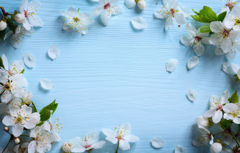 Фото обои цветы, весна, яблоня, wood, blue, blossom, flowers, spring