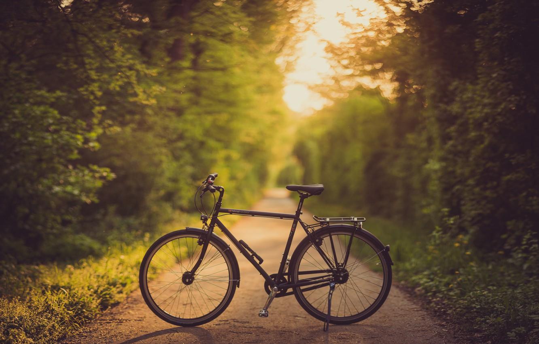 Фото обои дорога, велосипед, аллея, боке