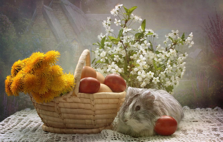Фото обои животные, цветы, яйца, весна, пасха, композиция, апрель, морские свинки